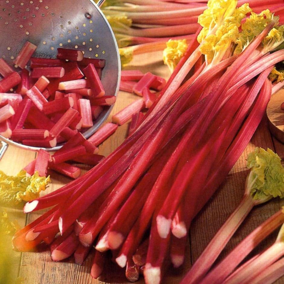 Buy Rhubarb Victoria Crown Rhubarb Victoria