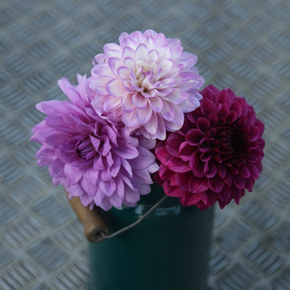 Buy Dahlia Collection Blues And Royals Dahlia Collection 999