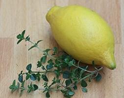 lemon thyme / ( syn Thymus citriodorus )