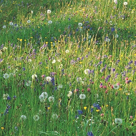Wildflowers for a sunny meadow