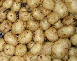 potato Duke of York