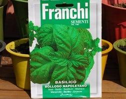 basil / Ocimum basilicum 'Napoletano'