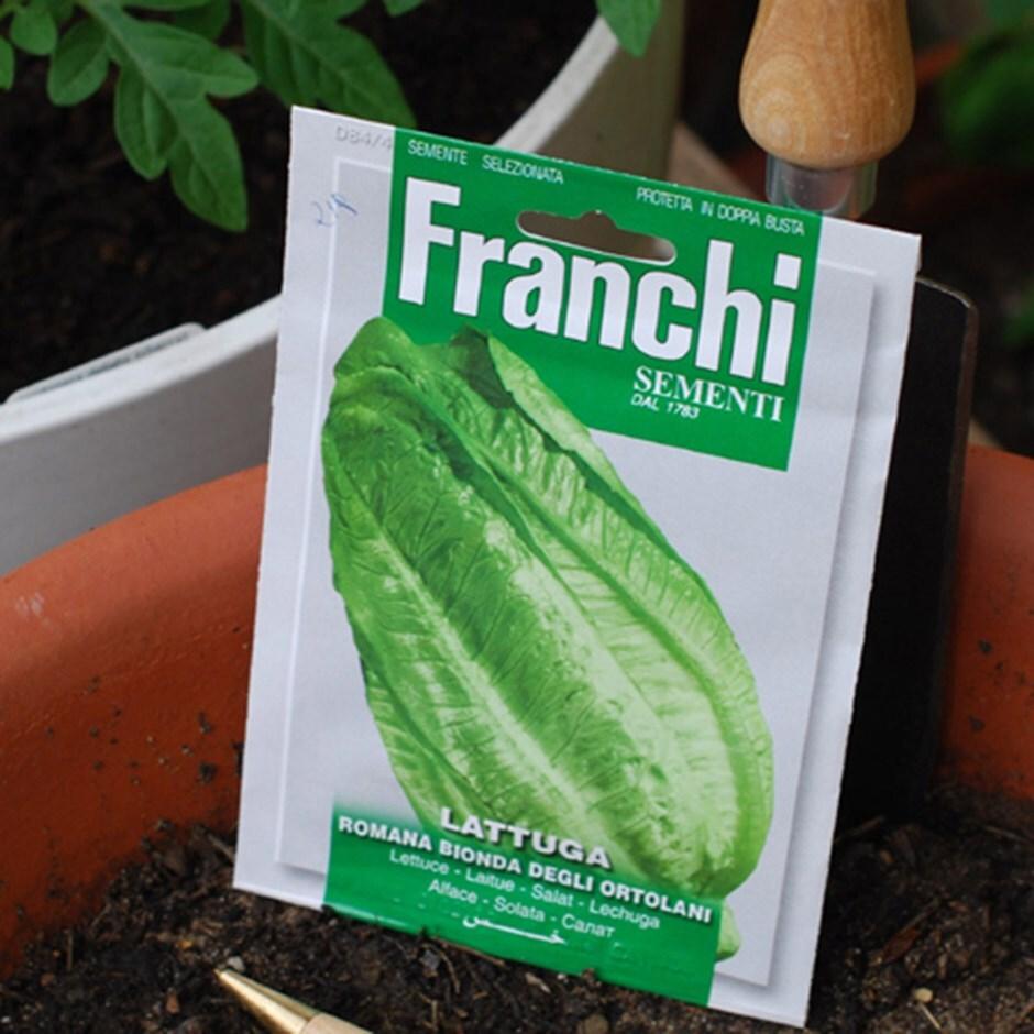 lettuce (Romaine) / Lactuca sativa 'Romaine Bionda'