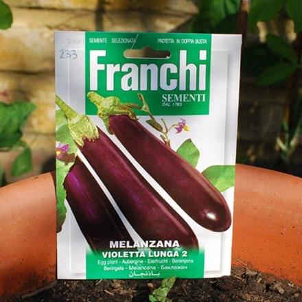 aubergine Violetta