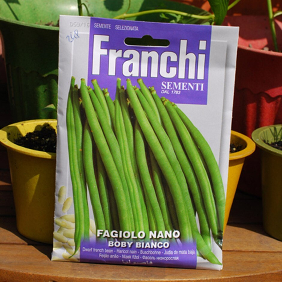 dwarf french bean /  Phaseolus vulgaris 'Boby Bianco'