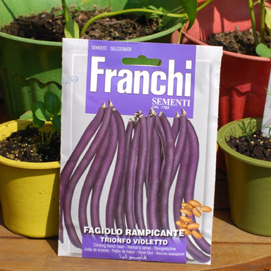 climbing French bean  / Phaseolus vulgaris 'Trionfo Violetto'