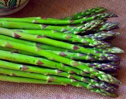 asparagus Connover's Colossal