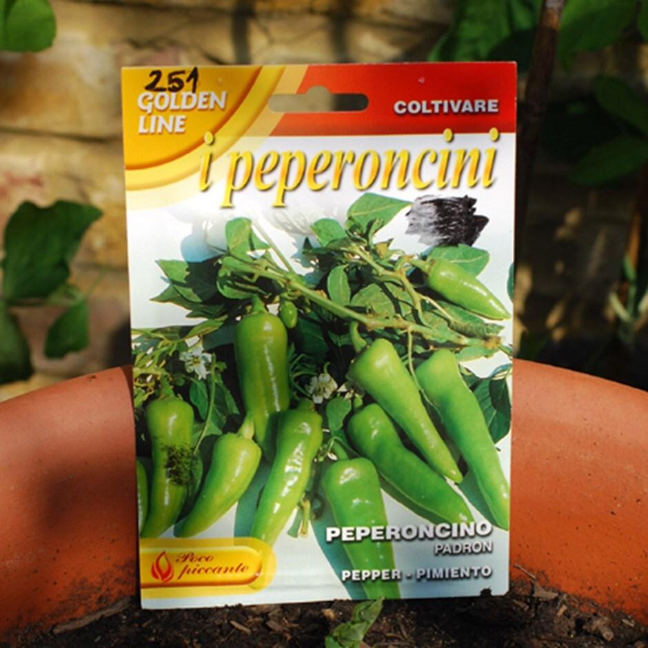 chillies / Capsicum annuum 'Padron'
