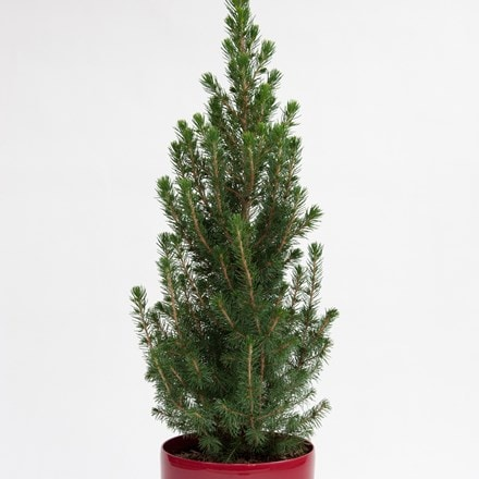 Tabletop Christmas tree and red pot cover