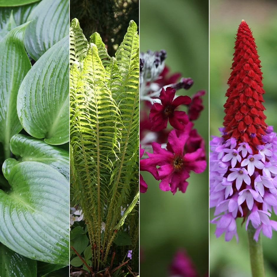 Shady Plants: Buy Damp Shade Plant Combination Damp Shade Plant