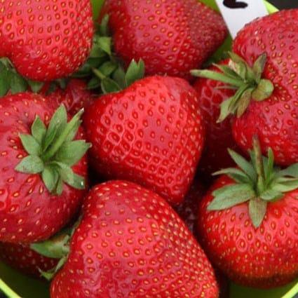 strawberry - mid season fruiting
