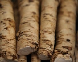 Armoracia rusticana Horseradish