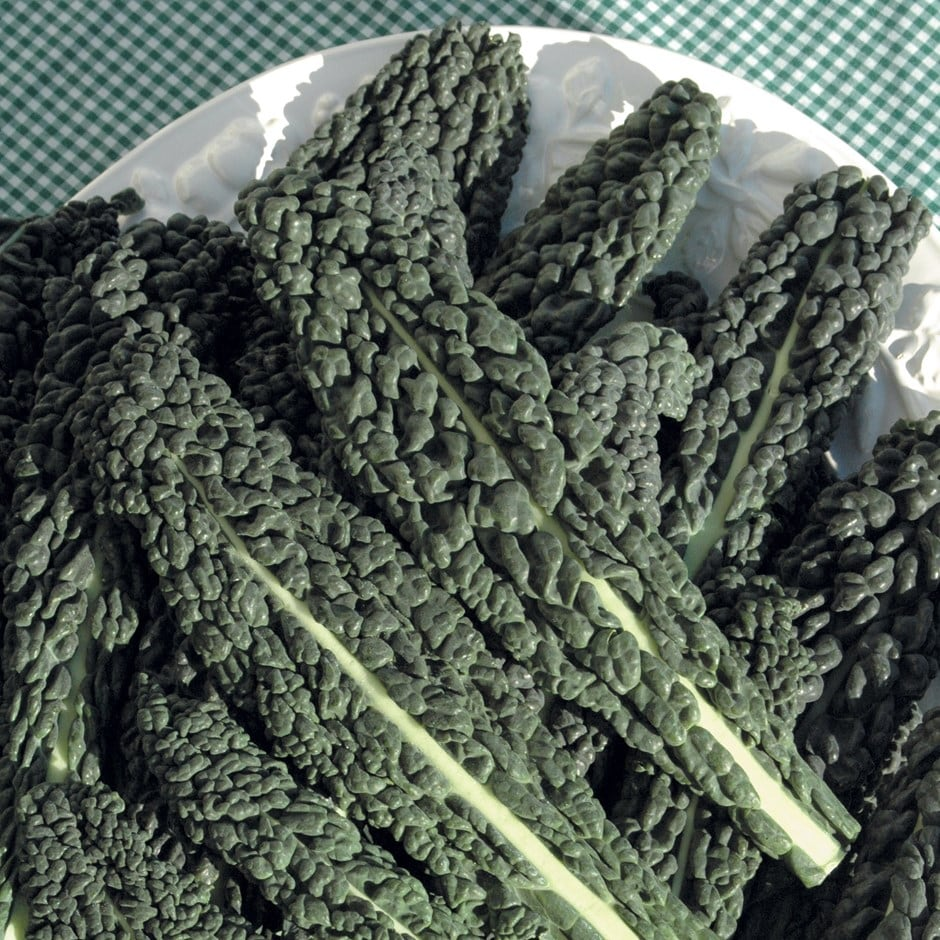 kale / Brassica oleracea (Acephala Group) 'Nero di Toscana'