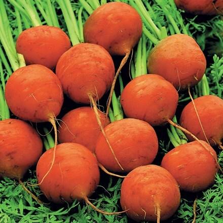 carrot Paris Market Baron