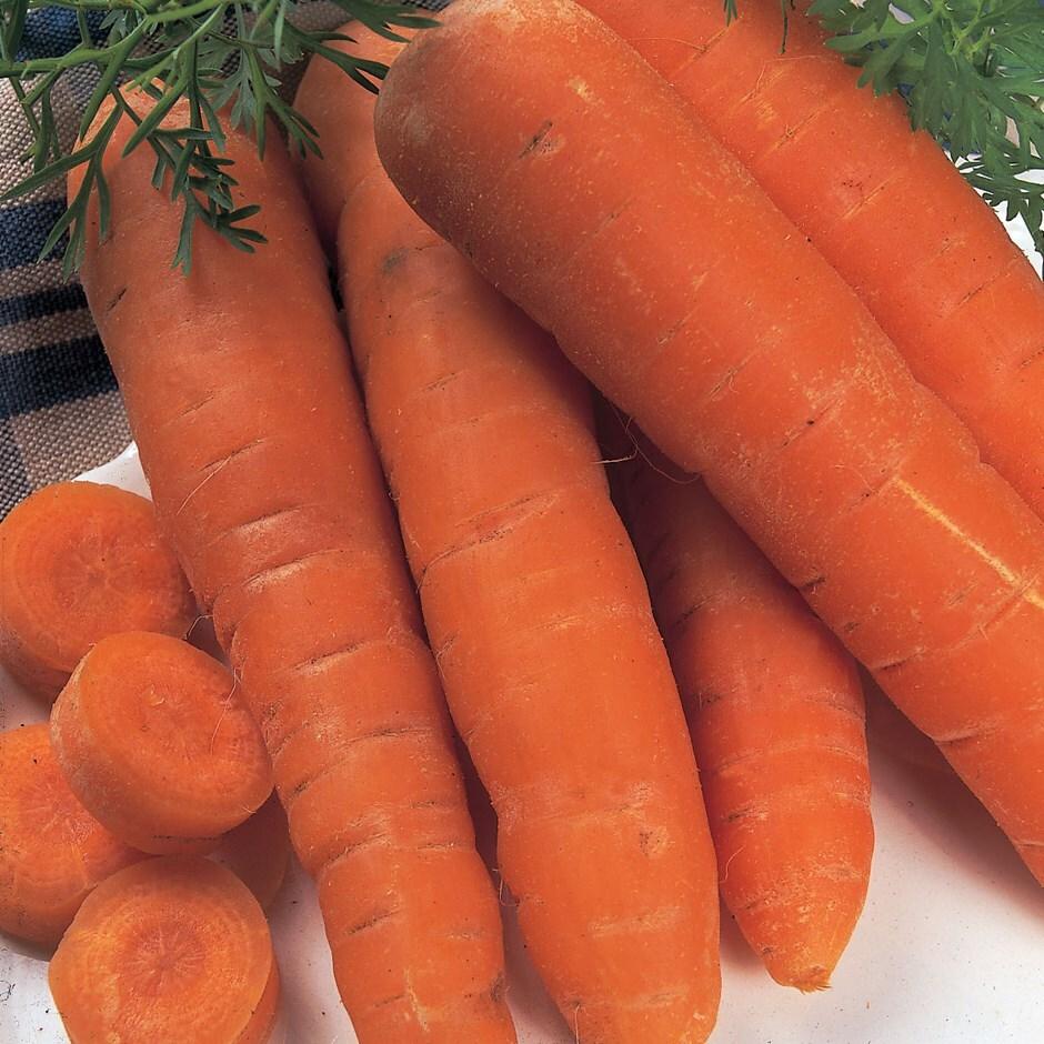 carrot / Daucus carota 'Autumn King'