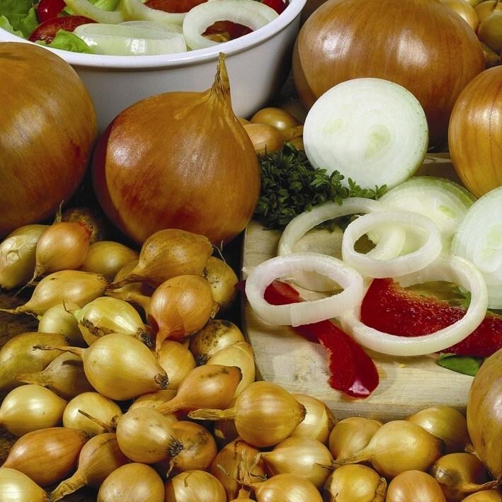 round yellow onion sets