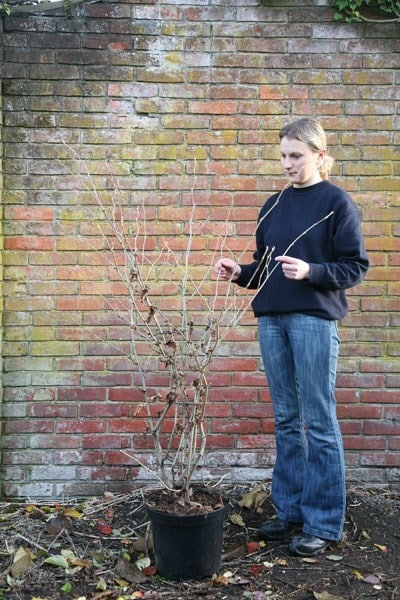 Shade Plants Outdoor Pots