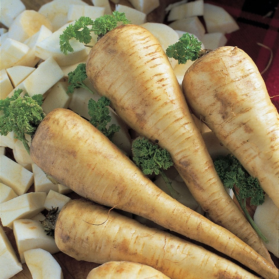 parsnip / Pastinaca sativa 'Tender and True' F1