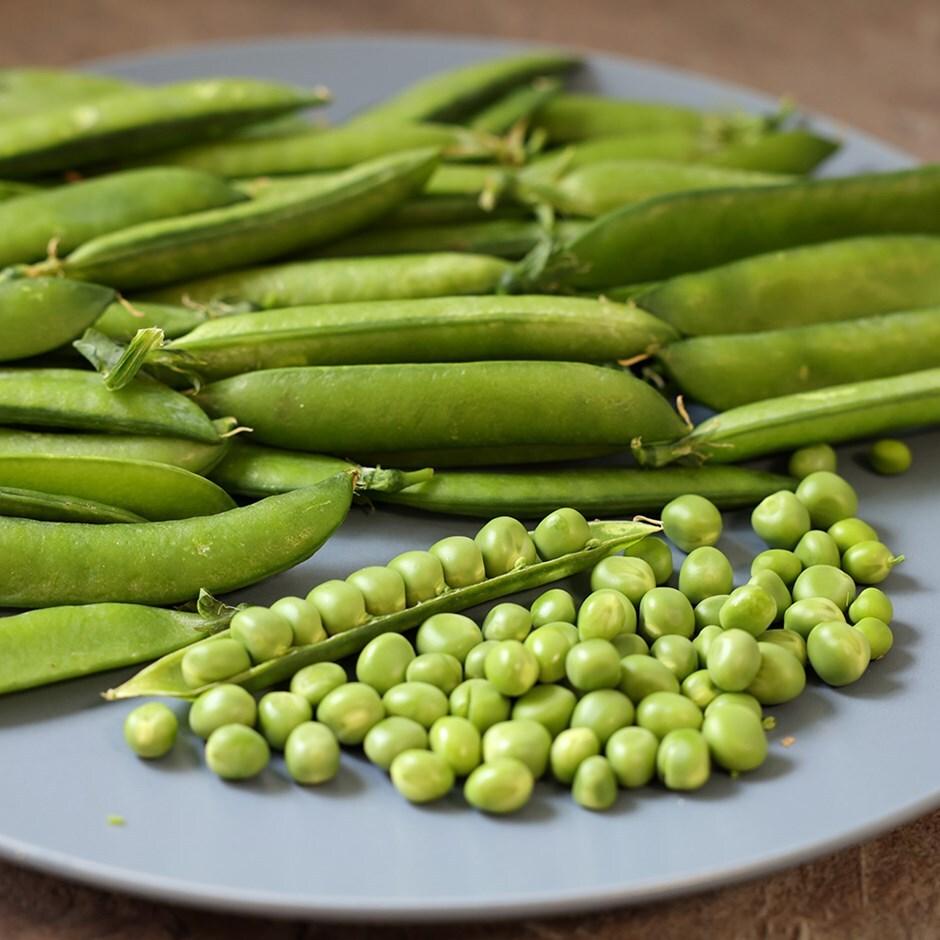 pea / Pisum sativum 'Hurst Greenshaft'