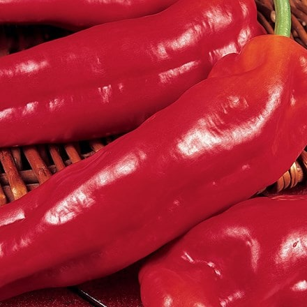 sweet pepper Long Red Marconi