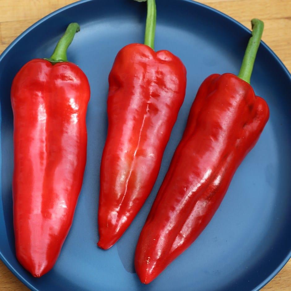 sweet pepper / Capsicum annuum 'Long Red Marconi'