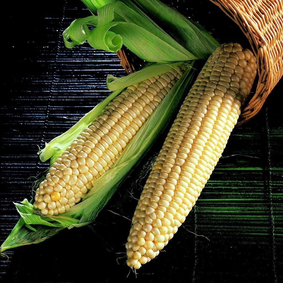 sweetcorn - extra tender sweet