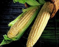sweet corn Swift