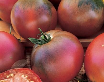 tomato Black Russian
