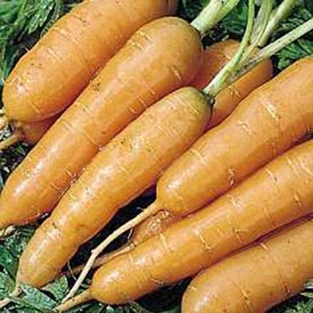 carrot Adelaide