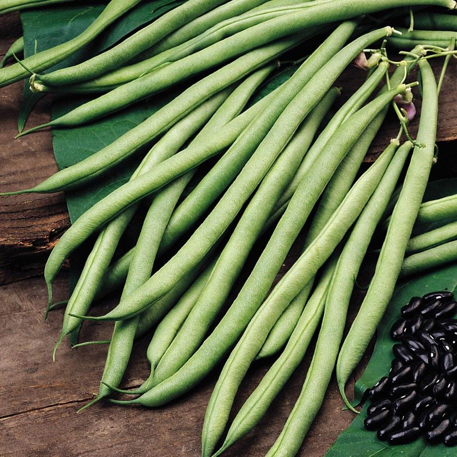 climbing French bean / Phaseolus vulgaris 'Cobra' (PBR)