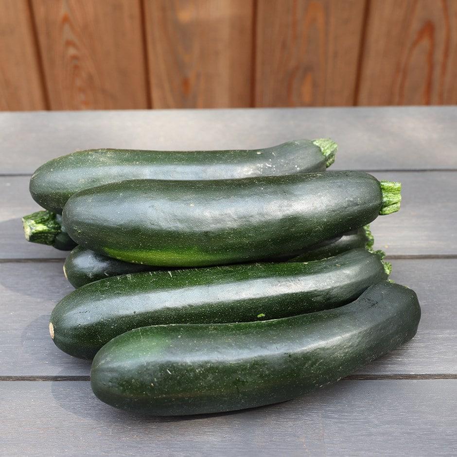zucchini / Cucurbita pepo 'Zucchini'