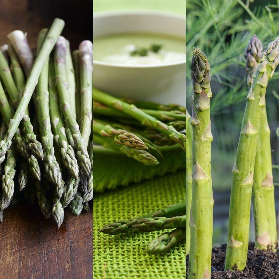 asparagus collection crowns