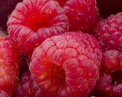 raspberry Erika - primocane (mainly autumn fruiting)