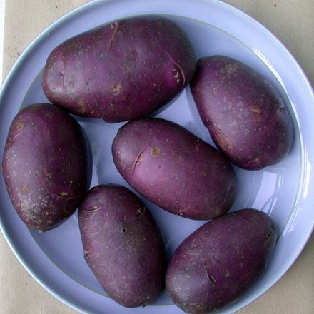 potato Blue Danube