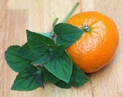 tangerine sage / Salvia elegans Tangerine'