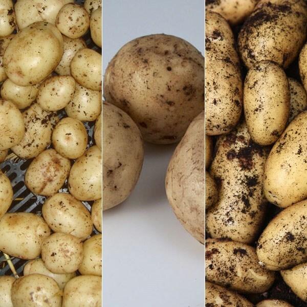 Autumn and Christmas potatoes
