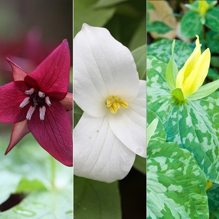 Award-winning Trillium collection