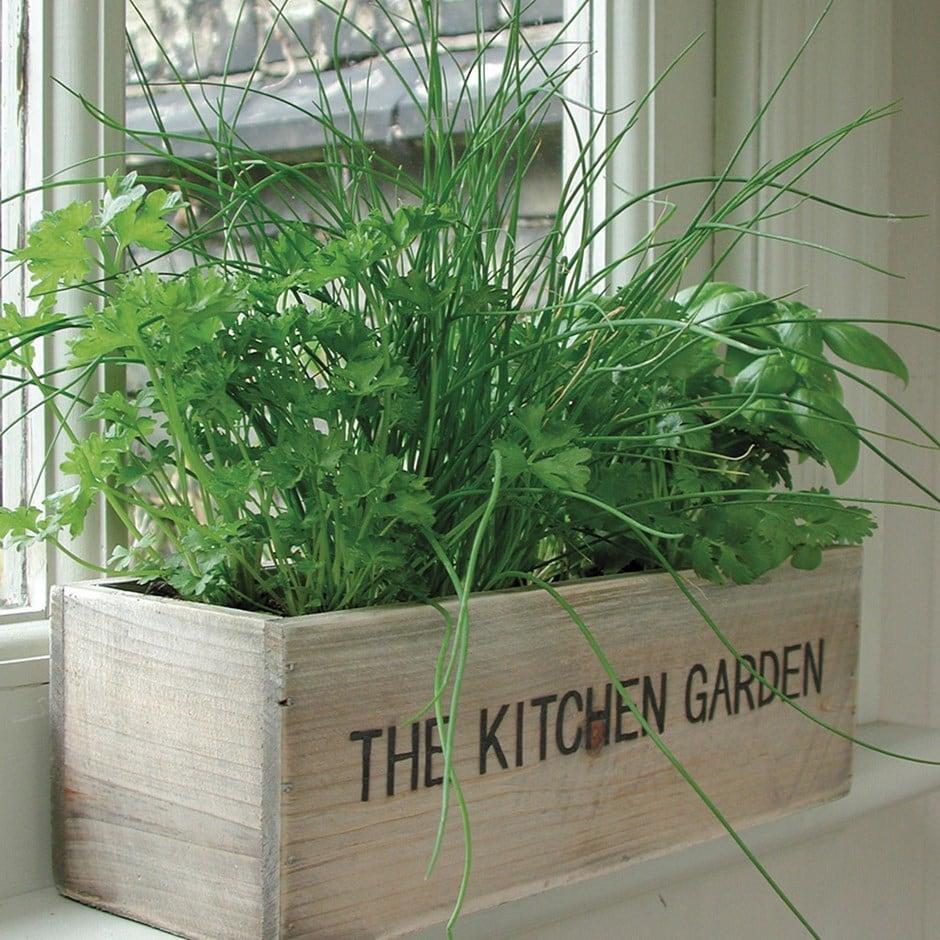 Buy herb kitchen garden kit herb kitchen garden kit for Kitchen garden plants