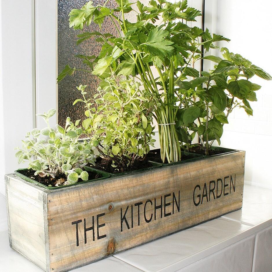 Mediterranean kitchen garden kit