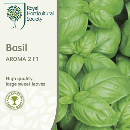 basil Aroma 2