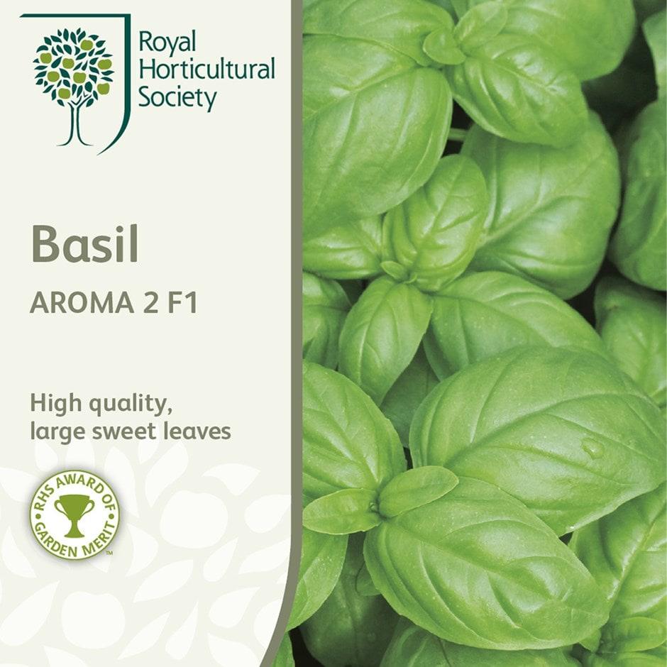 basil  / Ocimum basilicum 'Aroma 2'