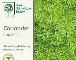 coriander / Coriandrum sativum 'Confetti'