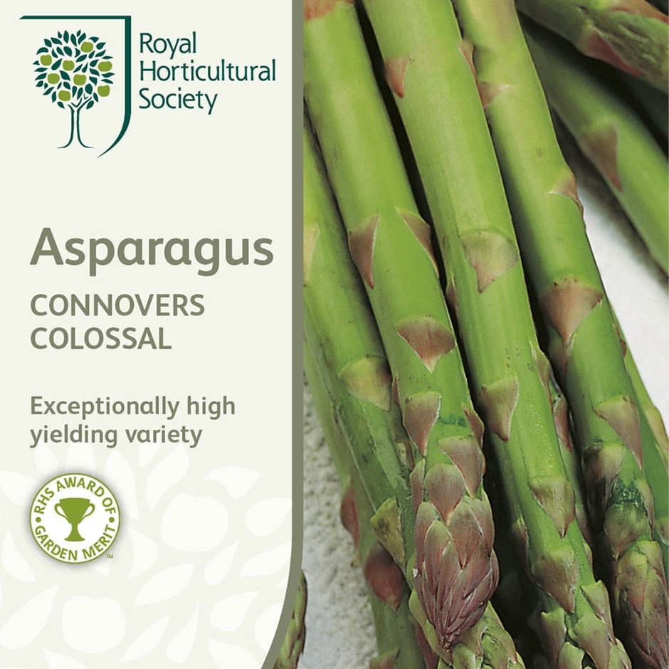 asparagus / asparagus officinalis 'Connover's Colossal'