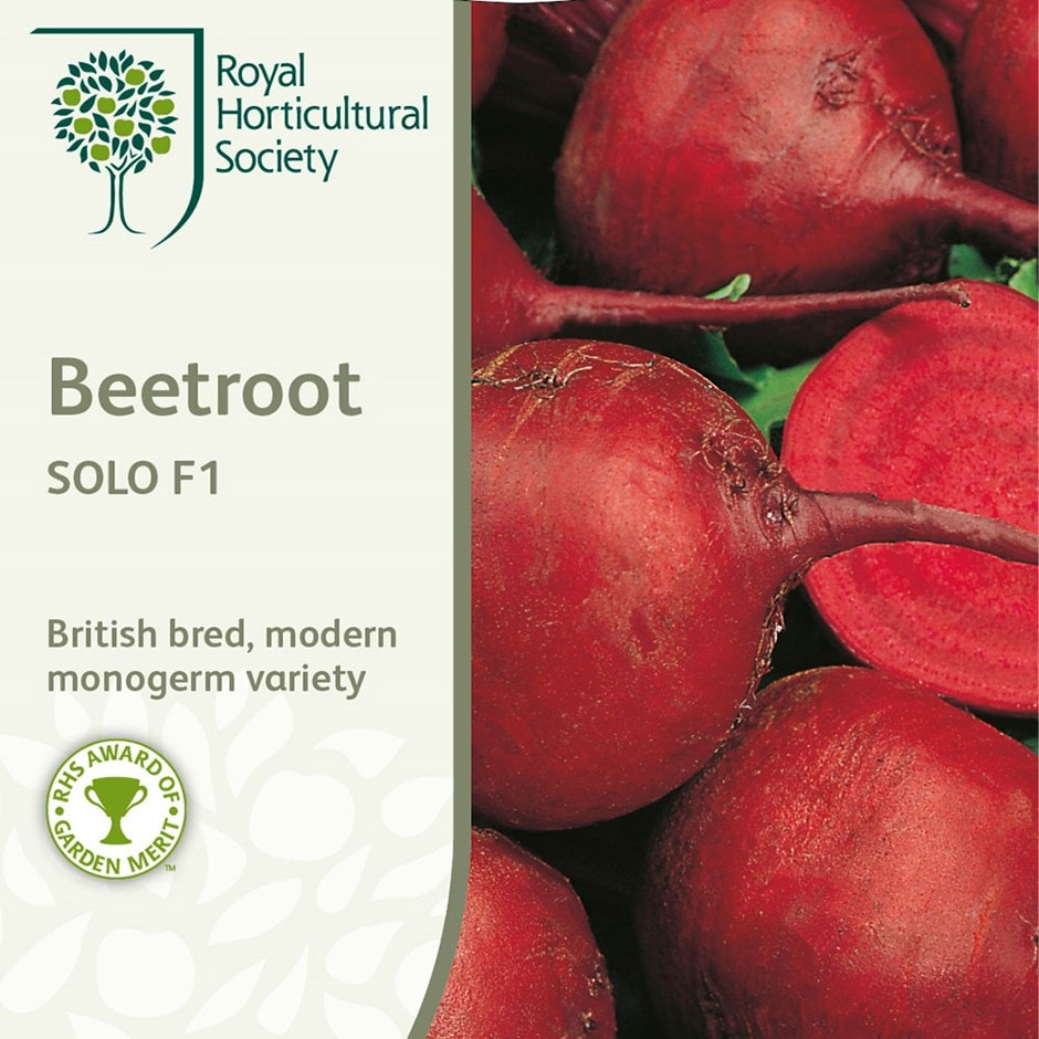beetroot / Beta vulgaris 'Solo'  F1