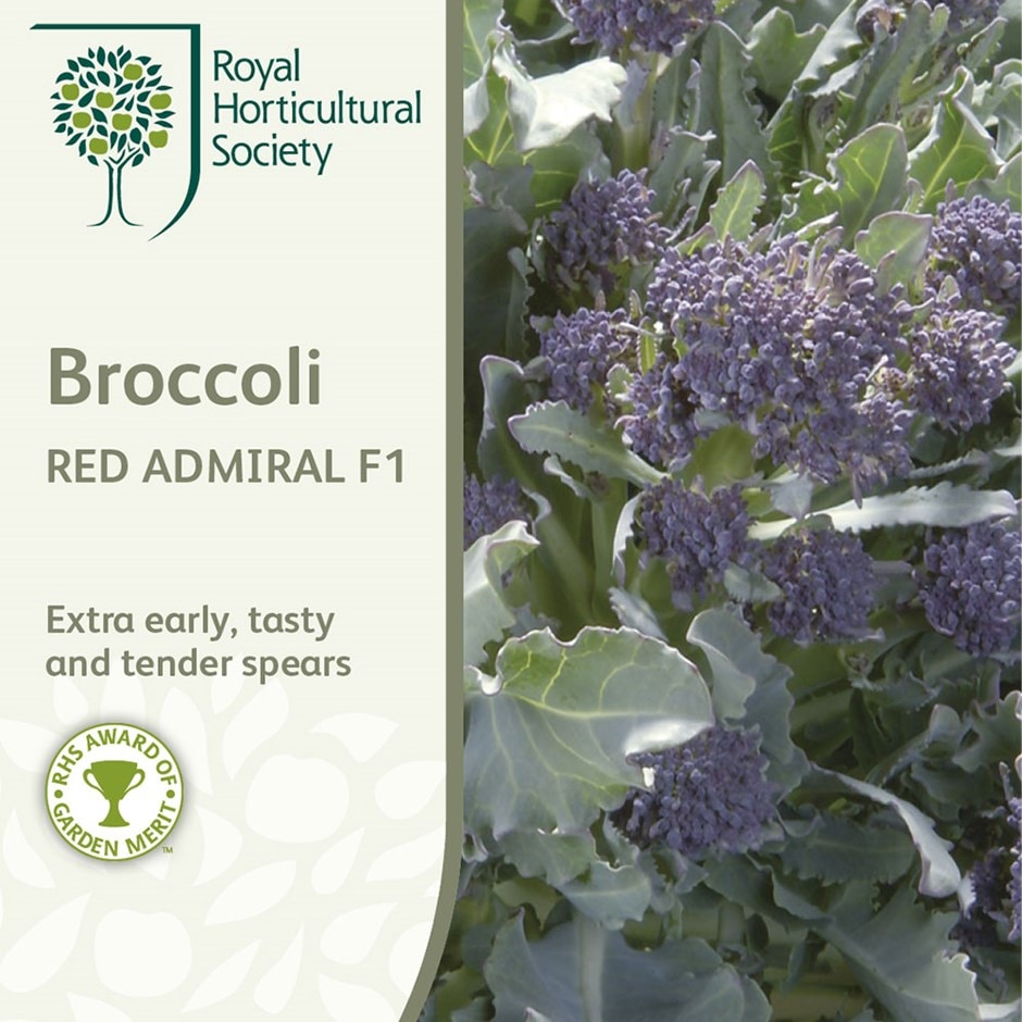 broccoli (purple sprouting) / Brassica oleracea (Italica Group) 'Red Admiral' F1