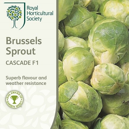 brussels sprout Cascade