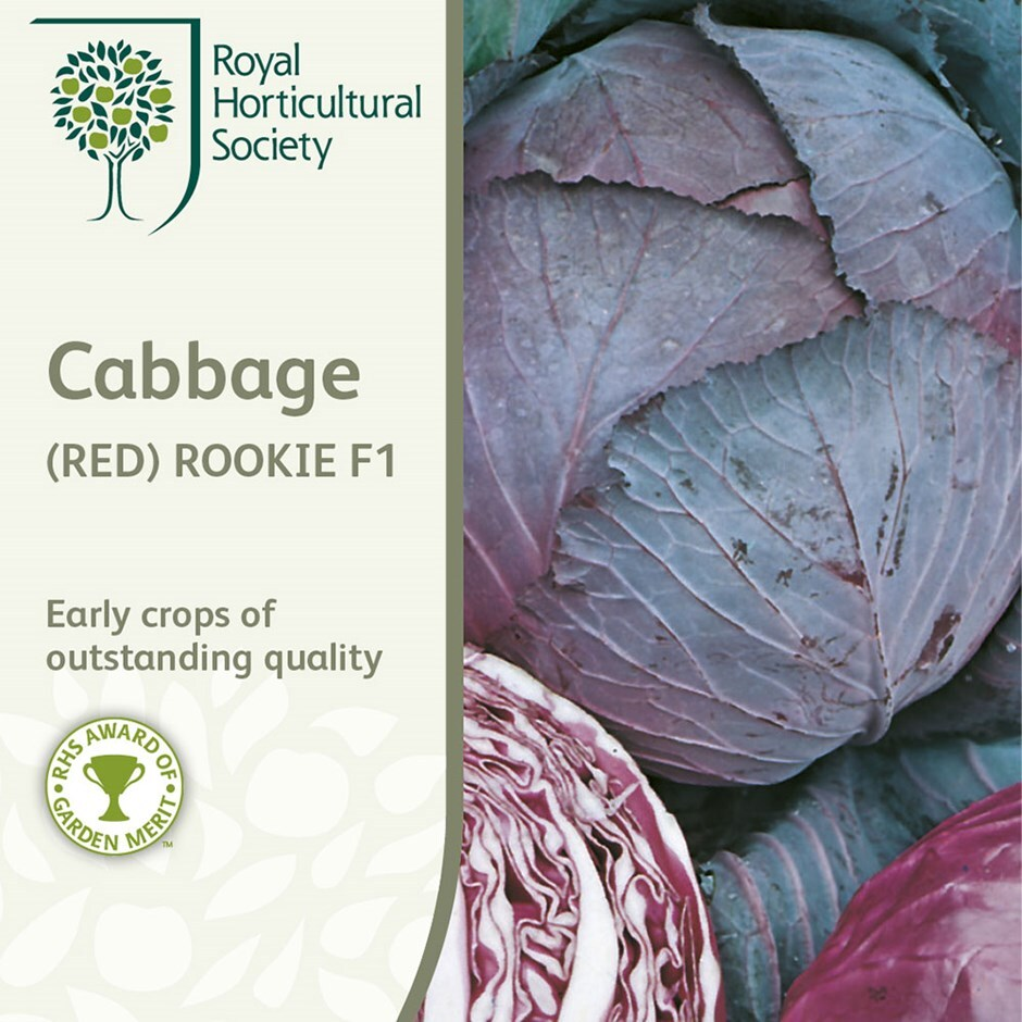 cabbage (red) or Brassica oleracea (Capitata Group) 'Rookie' F1