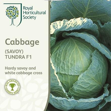 cabbage (Savoy) Tundra
