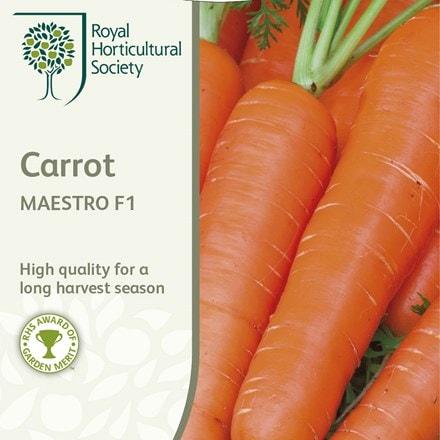 carrot Maestro
