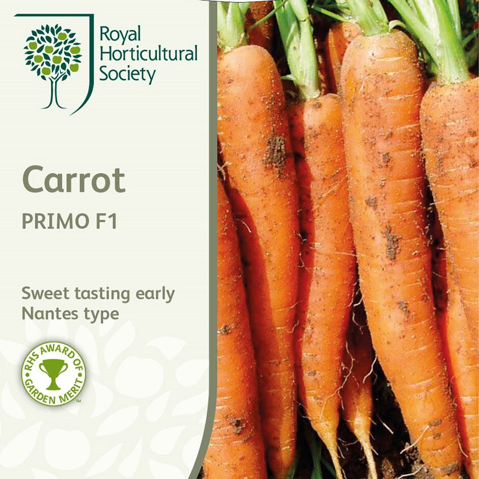 carrot / Daucus carota 'Primo' F1